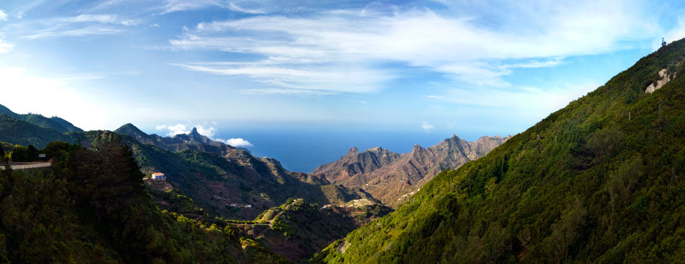Anaga forest in the north of Tenerife